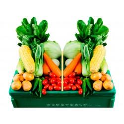 ご近所しゅんの野菜BOX(ミニ)
