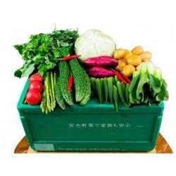 SYUN vegetable box Vietnam