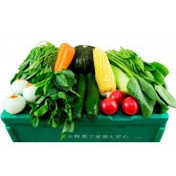 ベトナム人用お試ししゅんの野菜BOX(ミニ)